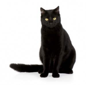 Black Cat Black cat names