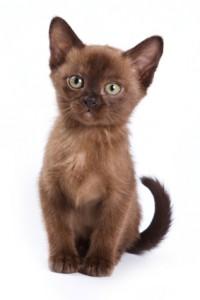 unusual cat names